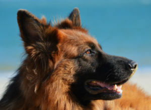 dog wallpapers download