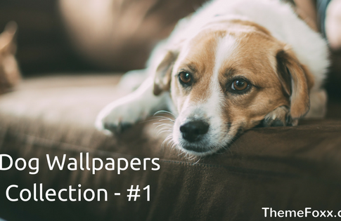 dog-wallpapers-download
